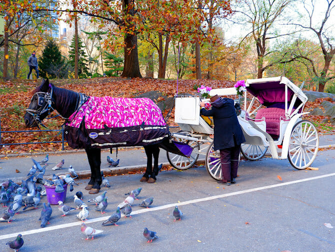 Carriage ride and guide in Central Park New York