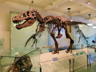 American Museum of Natural History in New York - Dinosaur
