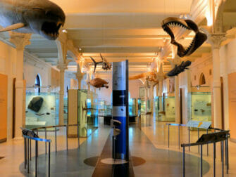 American Museum of Natural History in New York - Empty Tour