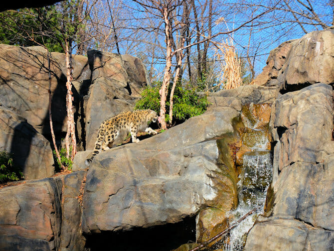 Central Park Zoo Tickets - Snow Leopard
